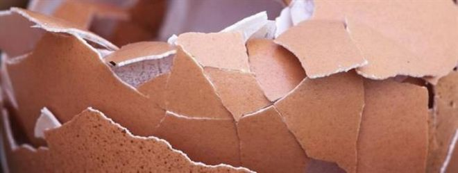 10 Surprising Uses Of Egg Shells You Never Knew About